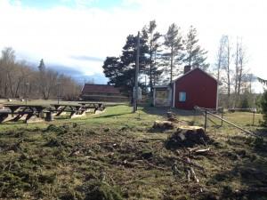 Nu blev det ljust och fint när de stora träden kapades ner.